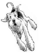 aaa use dog