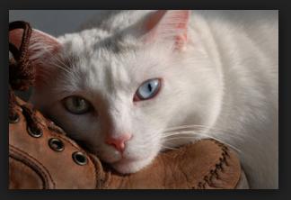 catboot