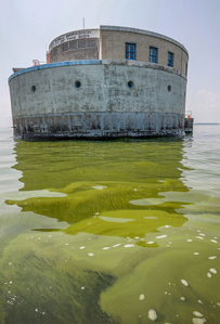 blue-green algae at the surface of Lake Erie near the water intake (background)