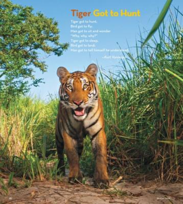 tigergottohunt